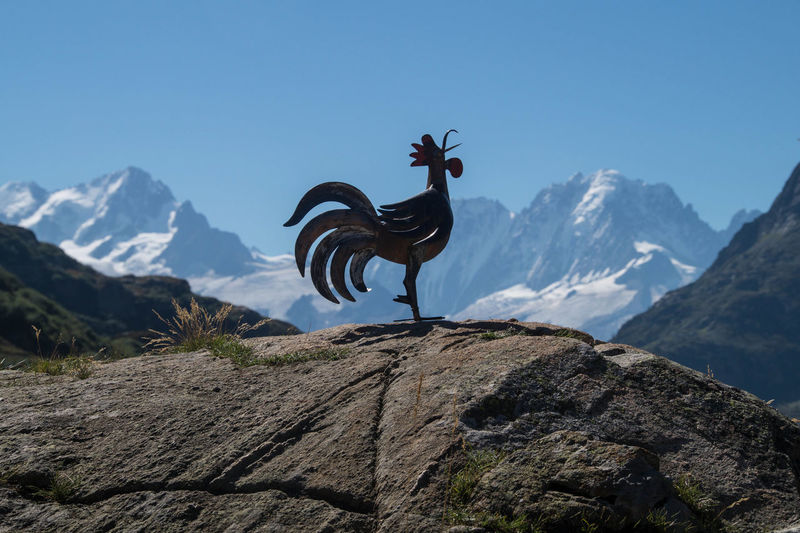 Metallic Rooster Sculpture On Rock Against Mountain