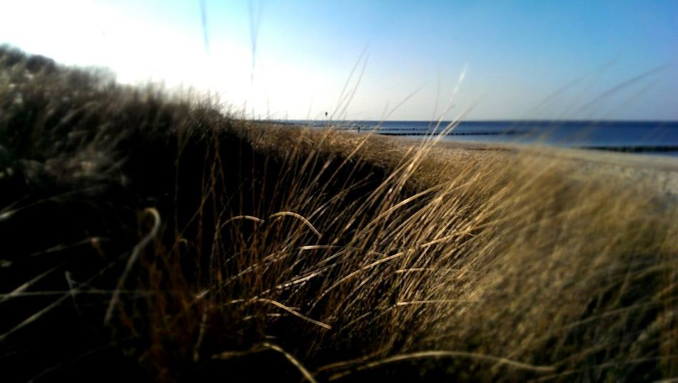 Dünen Strand ♥ Kühlungsborn Heimat❤❤❤ Nature Sea Water Close-up Scenics Beauty In Nature Beach Grass Tranquil Scene Outdoors Tranquility Sky Clear Sky Horizon Over Water Growth No People Day Timothy Grass Marram Grass
