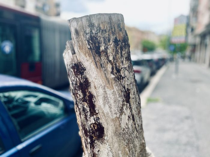 Close-up of tree trunk in city
