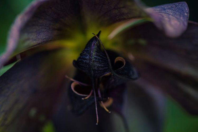 Floral beauty Close-up Insect Animal Wildlife Beauty In Nature Flower Plant Fragility Nature Vulnerability  Focus On Foreground Flowering Plant Petal No People Growth