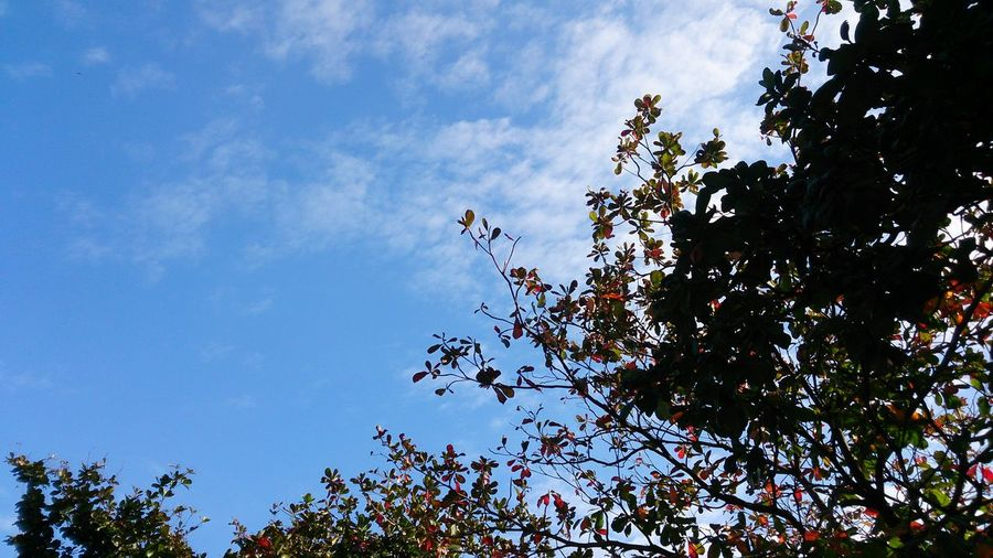 Nature 藍色 天空 Blue Cloud - Sky Bird Tree Branch Flock Of Birds Flying Sky Animal Themes Treetop Growing Plant Life Scenics
