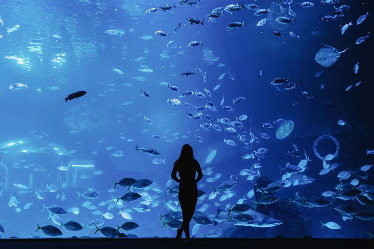 Silhouette of fish swimming in aquarium