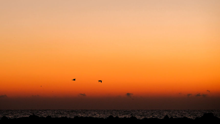 Beauty In Nature Bird Day Flying Horizon Over Water Nature No People Orange Color Outdoors Scenics Sea Silhouette Sky Sunset Tranquil Scene Tranquility Water