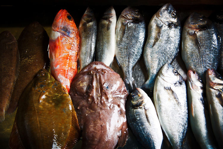 Animal Choice Close-up Fish Fish Market Food Food And Drink For Sale Freshness Healthy Eating High Angle View Indoors  Large Group Of Objects Market No People Raw Fish Raw Food Retail  Sea Fish Seafood Still Life Vertebrate Wellbeing