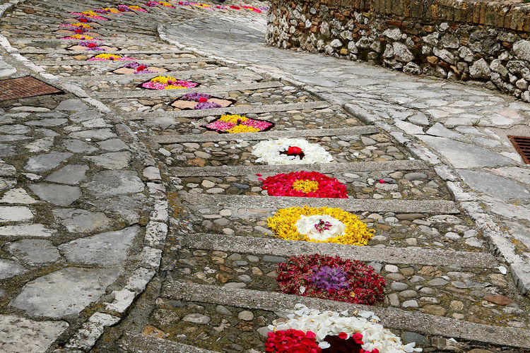 High angle view of multi colored flower on footpath