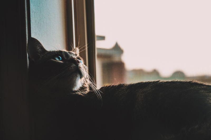 Close-Up Of Silhouette Cat In Windowsill