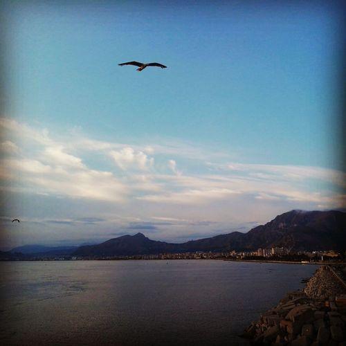 Sicilia - Palermo Bird Spread Wings Bird Of Prey Flying Water Mountain Sea Vulture Mid-air Sea Bird