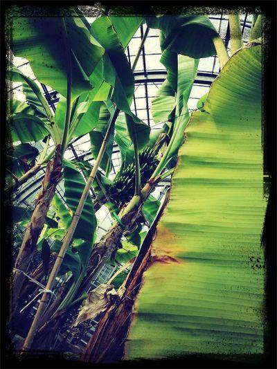 植物見に来た!