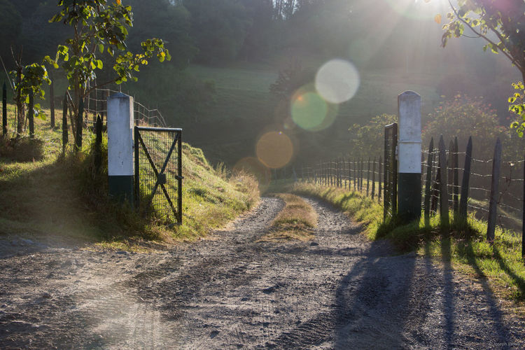 Day Gate Grass Horizontal Lens Flare Nature No People Outdoors Sunlight Tranquility Tree