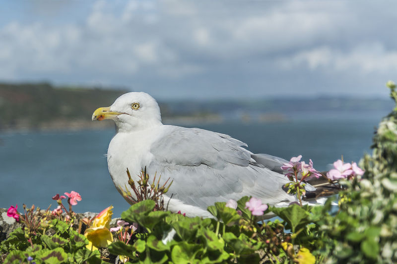 Seagull perching on plants by sea against cloudy sky