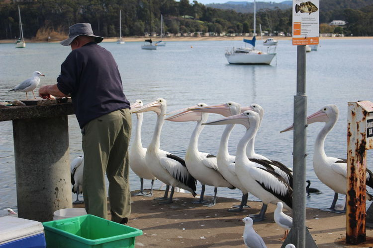Animal Wildlife Animals In The Wild Bird Casual Clothing Day Group Of Animals Men Nature One Person Outdoors Pelican Real People Rear View Sea Seagull Standing Vertebrate Water