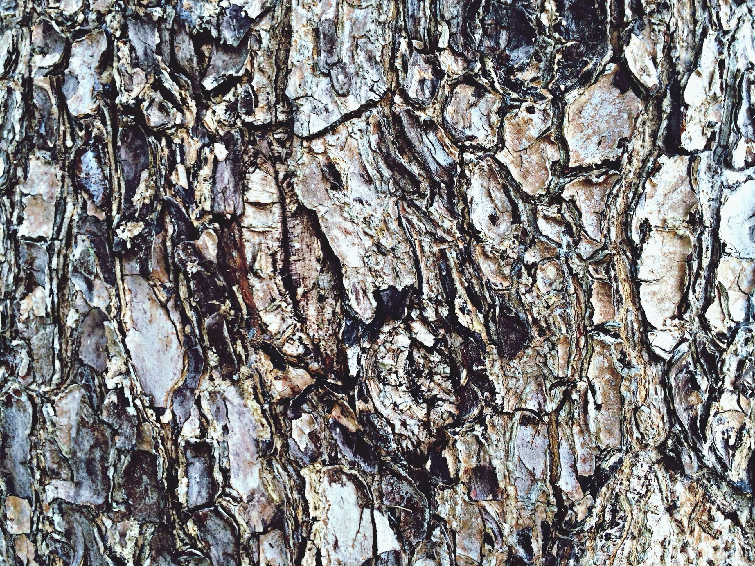 full frame, backgrounds, textured, tree trunk, tree, rough, branch, low angle view, bark, pattern, nature, natural pattern, close-up, bare tree, day, cracked, tranquility, outdoors, growth, no people