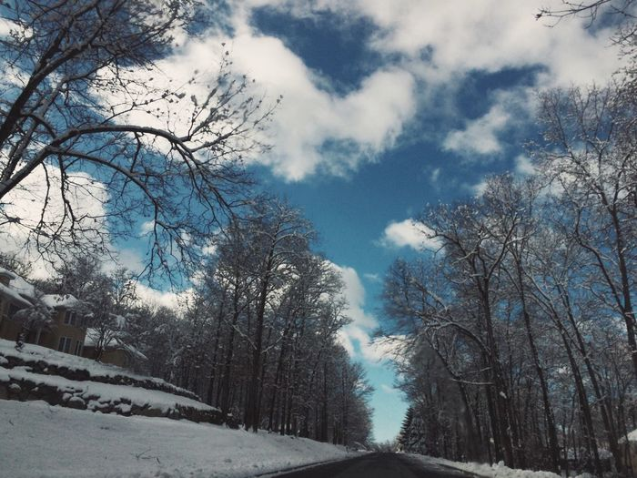 Road passing through bare trees against cloudy sky