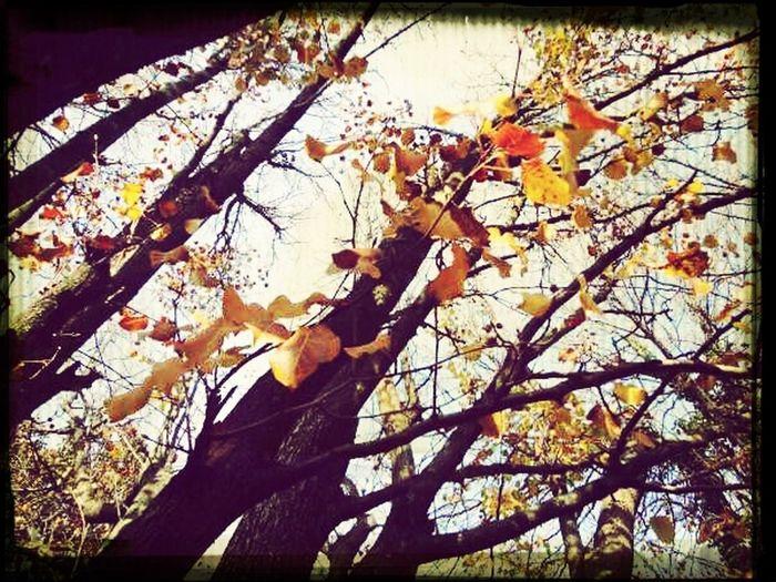 Nature Trees Fall Naturehippys Best Of Fall