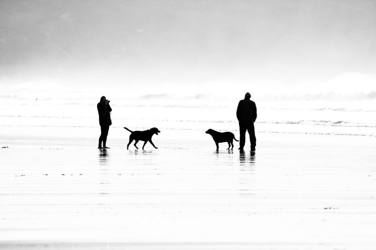 Silhouette people walking on beach against sky during winter