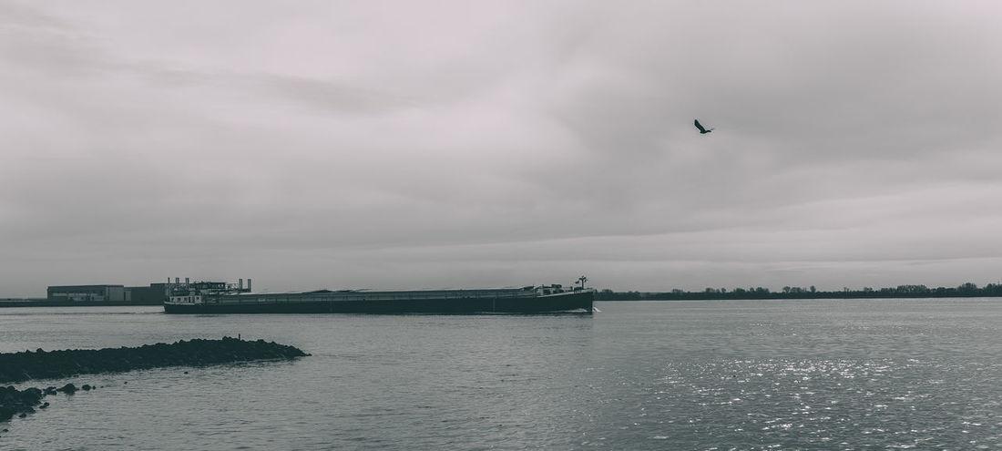 Ship Bird Black And White Black And White Photography Blackandwhite Canon Cloud - Sky Elbe Monochrome Monochrome Photography No People Outdoors Sea Ship Sigma 35mm Art Sky Tall Ship Water