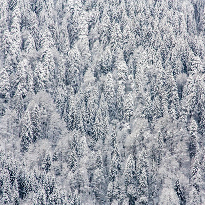 Wintertime Shades Of Winter Axvo Backgrounds Beauty In Nature Cold Temperature Day Fir Tree Forest Frozen High Angle View Landscape Mountain Nature No People Outdoors Pinaceae Pine Tree Polar Climate Scenics Snow Snowflake Snowing Tranquil Scene Tree Winter