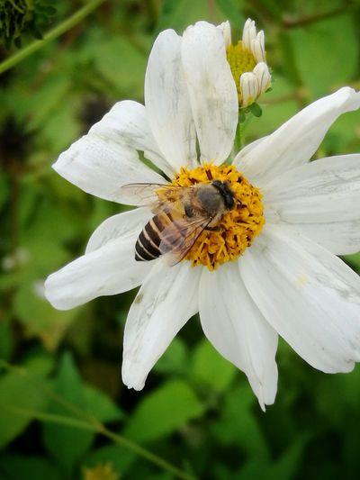 Green Flawer🌸 Natural Bee Beautiful Nature