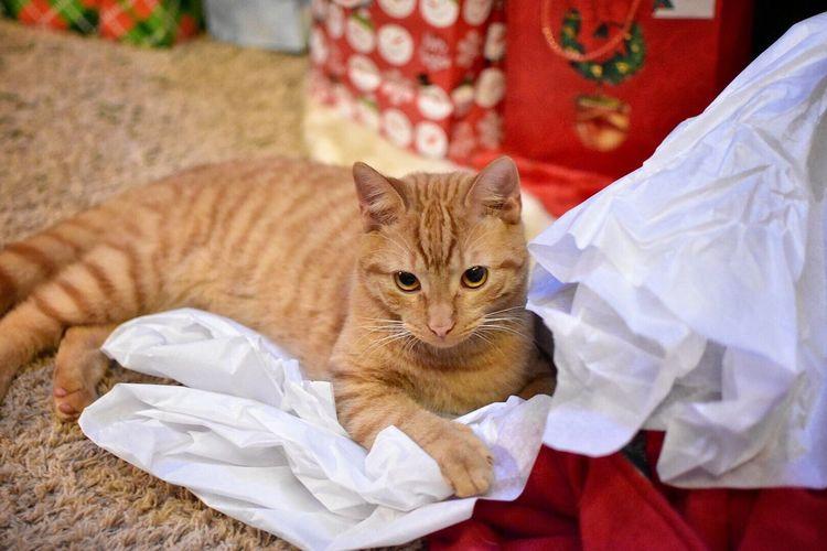 Ginger Cat On The Floor