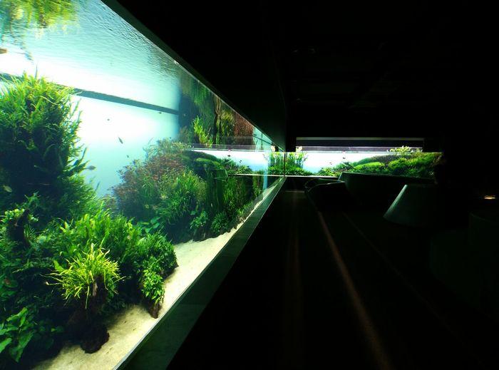 Florestas Submersas Forests Underwater By Takashi Amano