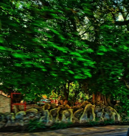 In motion, the awesome roots in this tree looks even more awesome because i took this picture without stopping my car!! CHWYLWY Fine Art Photography