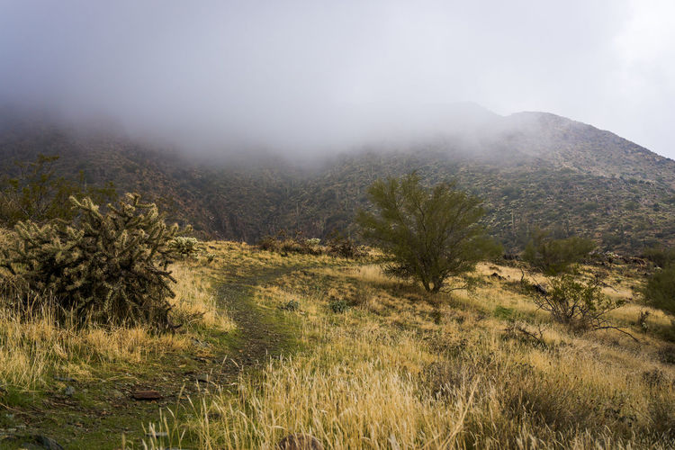 Scenic view of trail through field against sky during foggy weather in mountains