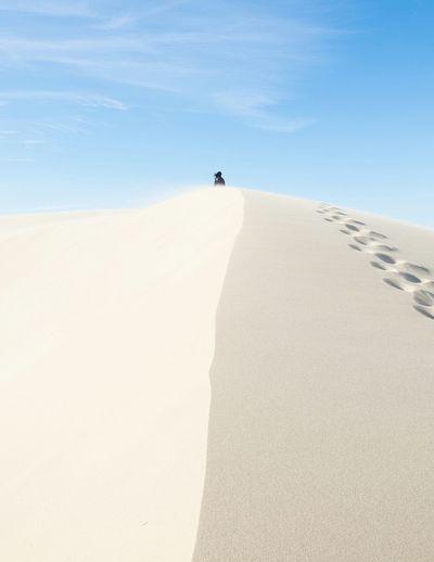 Dune Showcase: December Oregon Dunes Silhouette Oregon Coast EyeEm Best Shots Minimalism Pacific Northwest  Sunny Landscape My Best Photo 2015