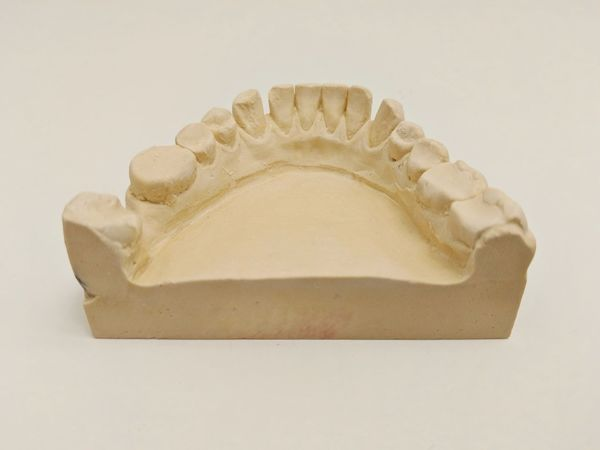 Lower teeth Mold from the dentist Teeth Toothy Smile Dentist Dentistry Mold White Background Healthy Eating Health Healthy Brush Mouth Dental Dental Health Healthcare And Medicine Eating Human Mouth Copy Ancient History Dental Care Missing Tooth Learning Brown Research White Background No People Science Close-up