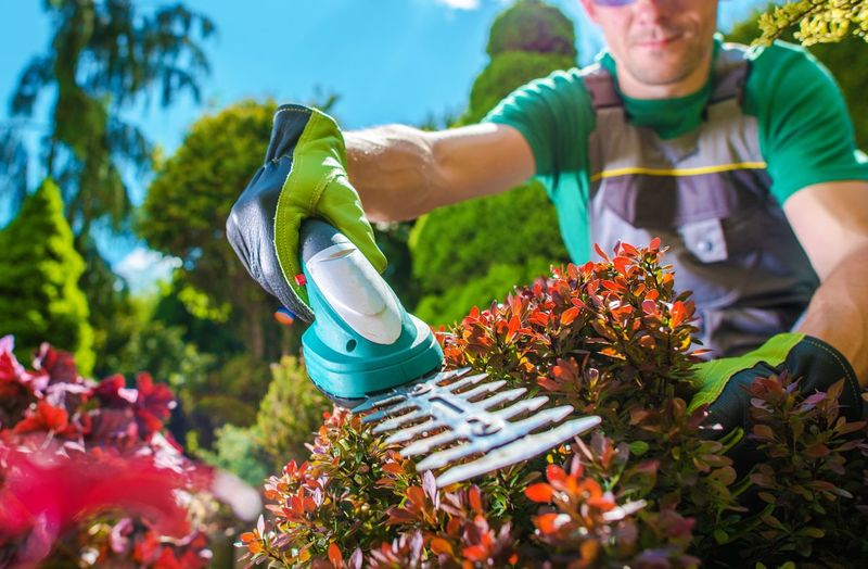Man cutting plants at garden