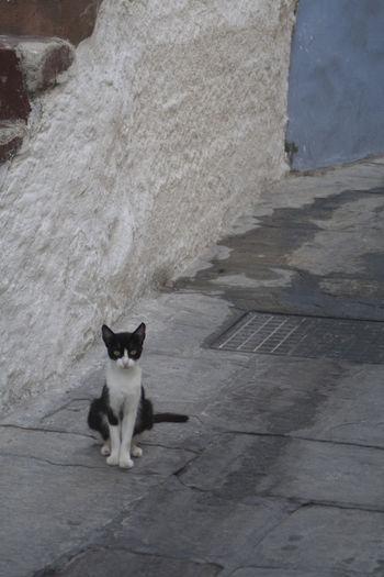 Portrait of cat sitting on footpath