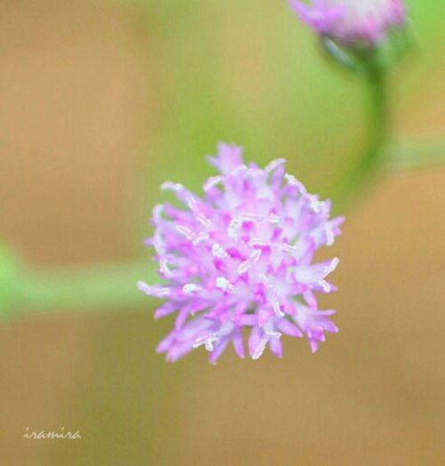 Flowers Nature Macro All_shots