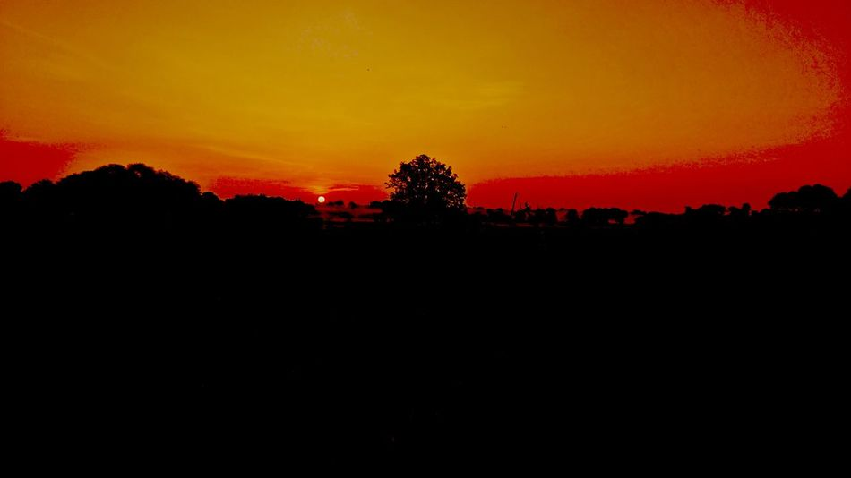 The amazing evening... Sunset Sun Evening Mobilephotography Mobile Photography Lenovo Photography Lenovo K6 Power Tree Astronomy Sunset Silhouette Space Orange Color Dramatic Sky Sky Landscape Sky Only Space And Astronomy Astrology