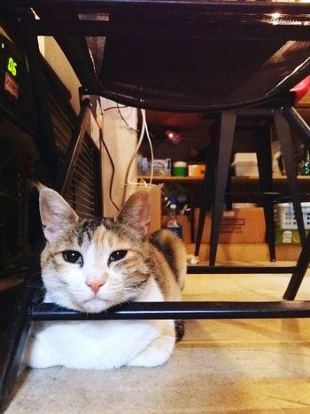 Cafe Cat Animal 고양이 카페 Cute 호아성 알바 Kitty