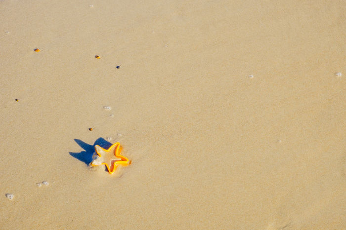 Backgrounds Surface Textured  Yellow Star Sand Land Beach Copy Space Toy Nature High Angle View Yellow No People Sea Day Representation Outdoors Holiday Water Sunlight Trip Fish Vacations Star Toy Plastic Still Life Children Toys Holiday Nature Childhood
