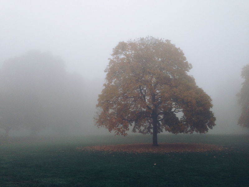 Fog Tree Outdoors No People Nature Landscape Winter Day Beauty In Nature Sky Park Life A Walk In The Park Autumn Colors Autumn Autumn Collection Autumn Leaves End Of Summer Early Bird Nobody Around Calmness Nebel Nebelmeer