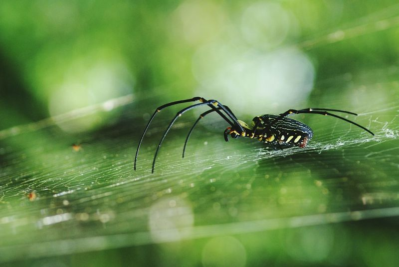 Amazing Creatures Little Creatures Nature Photography Macro Spider Spider The Great Outdoors - 2015 EyeEm Awards Exotic Creatures Spider Web Spider Silk