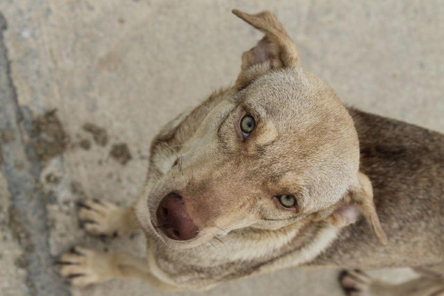 He say WTF!!! I Love My Dog Dog Pets