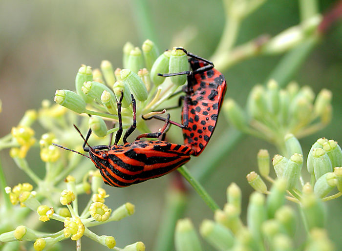 Animal Animal Themes Animal Wildlife Animal Wing Animals In The Wild Beauty In Nature Close-up Day Flower Flower Head Flowering Plant Focus On Foreground Growth Insect Invertebrate Nature No People One Animal Outdoors Plant Pollination