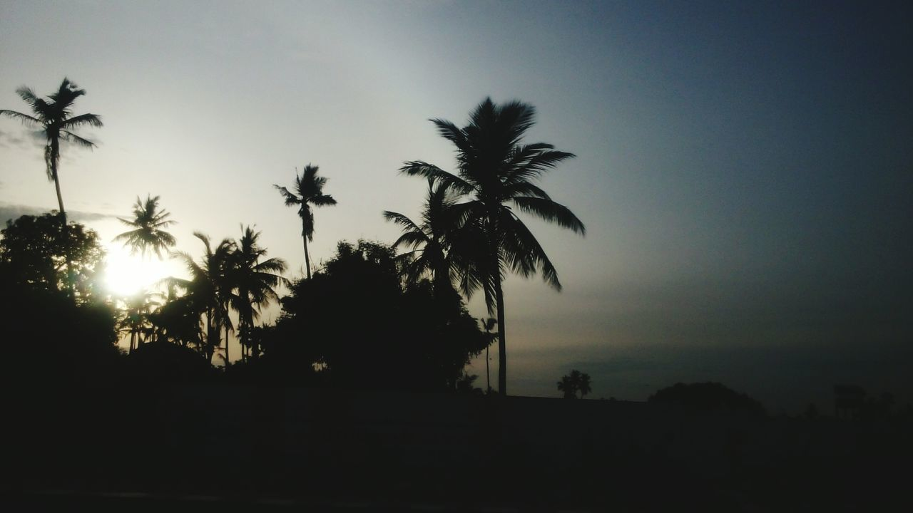 palm tree, tree, silhouette, nature, beauty in nature, sunset, scenics, no people, sky, tranquil scene, growth, landscape, tranquility, outdoors, clear sky, day