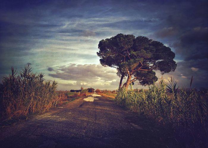 EyeEm Best Shots NEM Submissions IPhoneography AMPt_community EyeEm Nature Lover WeAreJuxt.com