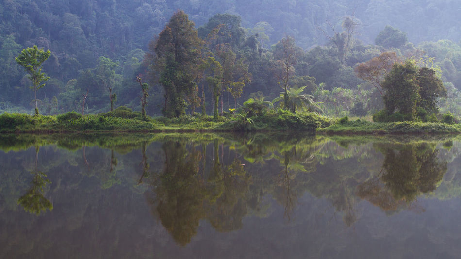 Lovely mist in the morning .. INDONESIA Beauty In Nature Day Digital Composite Forest Green Color Idyllic Lake Land Nature No People Outdoors Plant Reflection Scenics - Nature Symmetry Tranquil Scene Tranquility Tree Water Waterfront EyeEmNewHere The Traveler - 2018 EyeEm Awards The Great Outdoors - 2018 EyeEm Awards