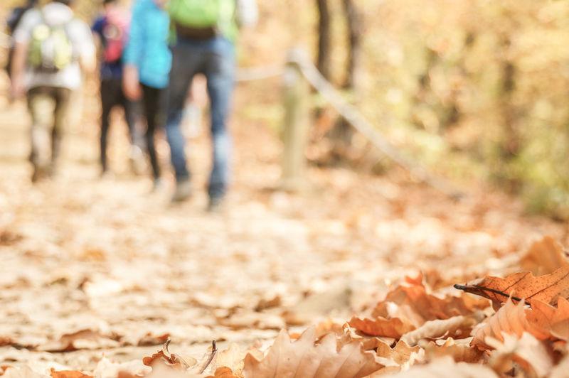 Autumn Chunggyesan Mountain Mountain Hiking