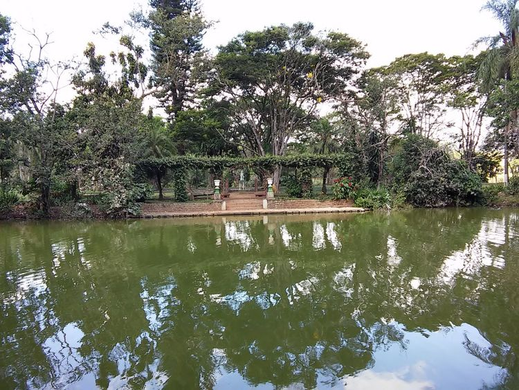 SãoLourenço Beauty In Nature Brasil Day Island Lake Minasgerais Nature No People Outdoors Parquedasaguas Reflection Tranquil Scene Tranquility Tree Water