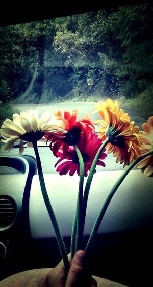 Flores Y Más Flores hermoso<3