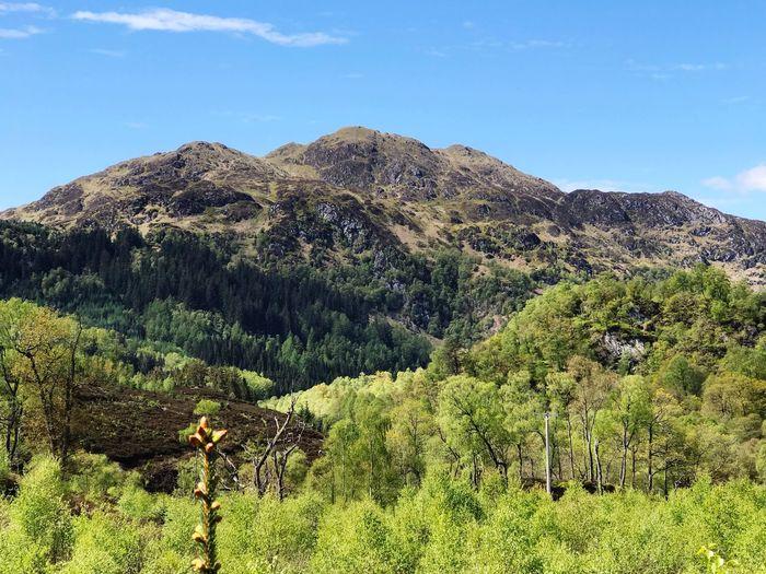 Scotland Plant