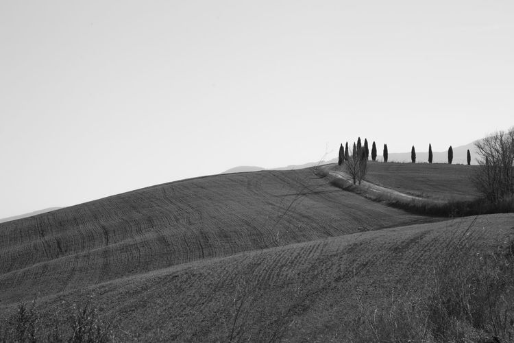 Sky Landscape Land Environment Field Nature Scenics - Nature Tranquil Scene Outdoors Clear Sky Tranquility Copy Space Beauty In Nature Plant No People Day Non-urban Scene Architecture Agriculture Grass Crete Senesi Pienza Val D'orcia Tuscany Tuscany Hills Tuscany Countryside Cypresses Road