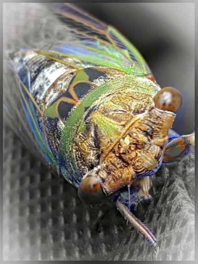 Close-up Bug