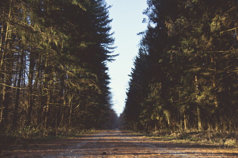 Beauty In Nature Day Forest Forest Path Forest Photography Forestwalk Growth Kerber Landscape Landscape_Collection Landscape_photography Nature Nature No People Outdoors Road Scenics Sky The Way Forward Tranquil Scene Tranquility Tree Tree Place Of Heart