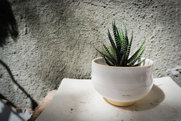 Succulent Plant Succulents Green Potted Plant Close-up Plant Vase Flower Pot Aloe Spiked Thorn EyeEmNewHere