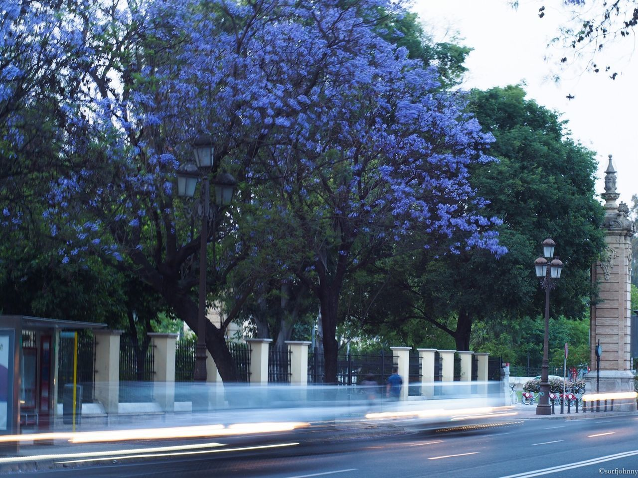 tree, road, growth, outdoors, day, transportation, nature, branch, springtime, no people, flower, city, beauty in nature, sky
